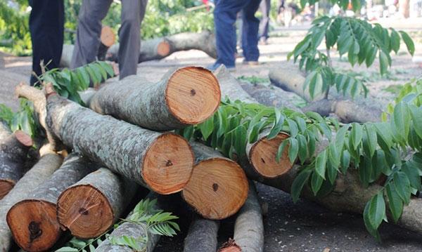 Gỗ Sưa, các loại gỗ tự nhiên dùng trong nội thất