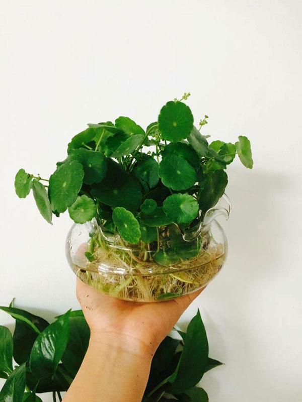 trồng cây phong thủy theo tuổi tỵ