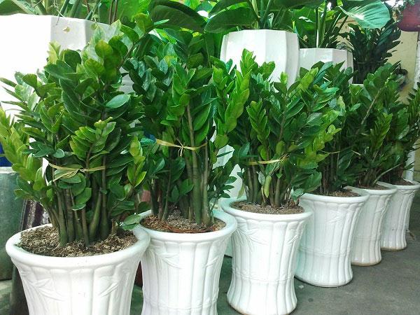 trồng cây phong thủy theo tuổi tý