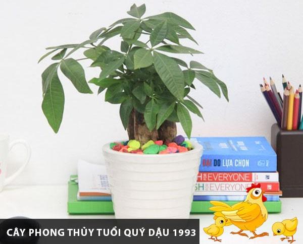 thiet-ke-noi-that-voi-mau-sac-hop-phong-thuy-tuoi-quy-dau-1993